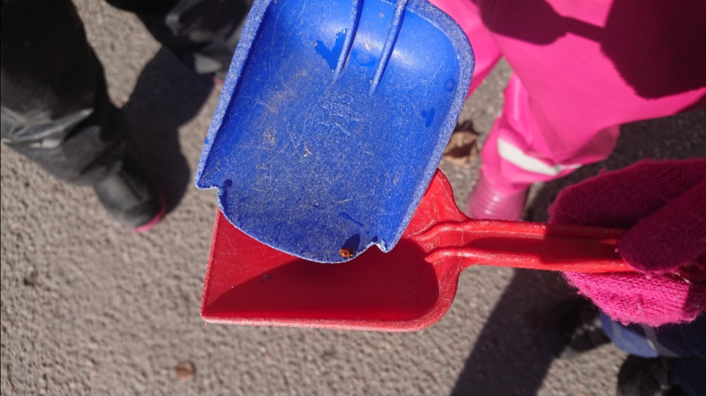 Nyckelpiga i en liten plastspade